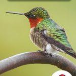Page couverture Le colibri