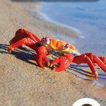 Page couverture Le crabe