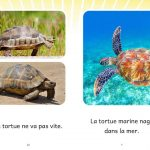 Extrait La tortue