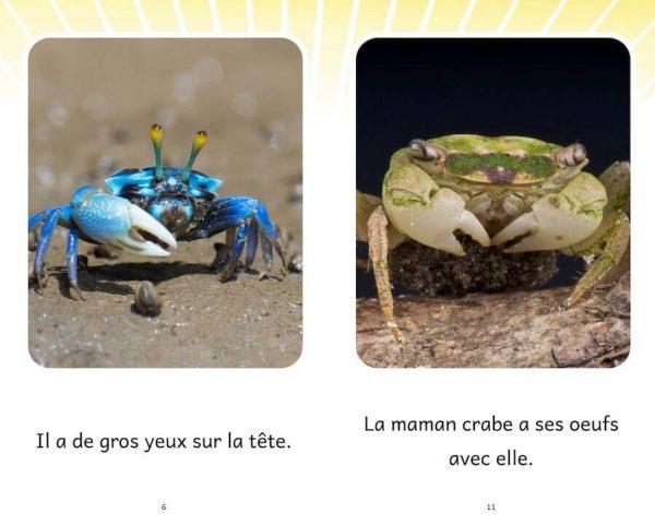 Extrait Le crabe